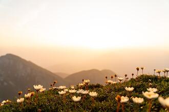 Clemens Bartl, Mountain Blossoms (Österreich, Europa)