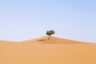 Rupert Höller, Home Alone (Morocco, Africa)