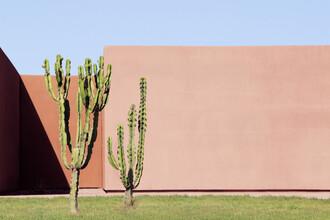 Rupert Höller, Cactus Brothers (Marokko, Afrika)