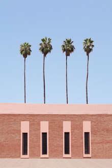 Palm Tree Factory - Fineart photography by Rupert Höller