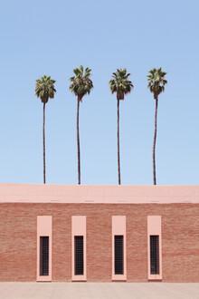 Rupert Höller, Palm Tree Factory (Morocco, Africa)