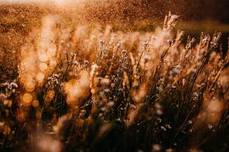 Danny Schöning, Sonne und Regen (Deutschland, Europa)