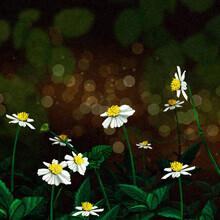 Katherine Blower, White Flowers (Großbritannien, Europa)