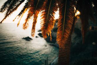 Marco Leiter, Palmen im Sonnenuntergang an der ligurischen Küste, Italien (Italien, Europa)