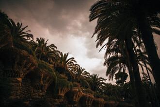 Marco Leiter, Palmen kurz vor Gewitter (Spanien, Europa)
