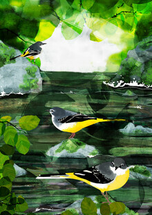 Katherine Blower, Grey Wagtails (United Kingdom, Europe)