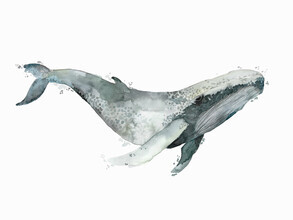 Christina Wolff, Sea Life - Humpback Whale (New Zealand, Oceania)