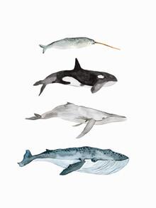 Christina Wolff, Sea Life - Whales (Neuseeland, Australien und Ozeanien)
