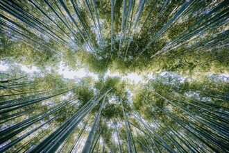 André Alexander, Bamboo forest (Japan, Asia)