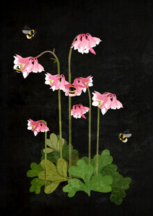 Katherine Blower, Bumble Bees (Großbritannien, Europa)