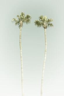 Melanie Viola, Vintage Palmenidylle (Vereinigte Staaten, Nordamerika)