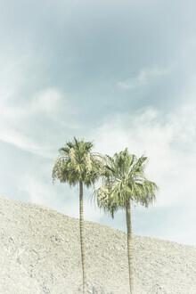 Melanie Viola, Palmen in der Wüste (Vereinigte Staaten, Nordamerika)