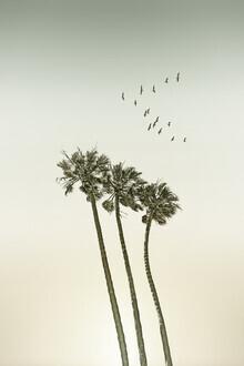 Melanie Viola, Vintage Palmen im Sonnenuntergang (Vereinigte Staaten, Nordamerika)