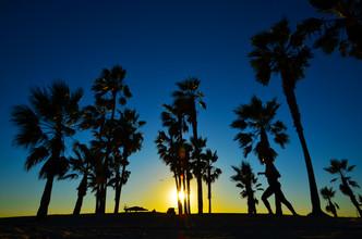 Michael Brandone, Sonnenuntergang in Palmenschatten (Vereinigte Staaten, Nordamerika)