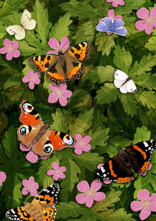 Katherine Blower, Butterflies (United Kingdom, Europe)