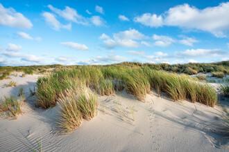 Jan Becke, Dune landscape (Germany, Europe)