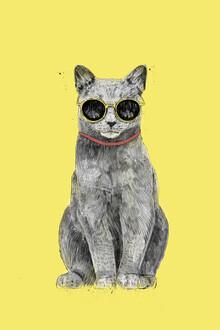 Balazs Solti, Summer Cat (Hungary, Europe)