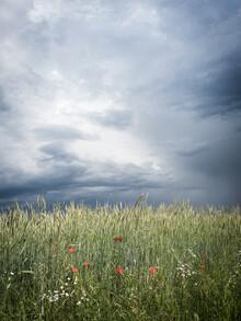 Bernd Grosseck, Mohnnblumen im Feld vor aufziehendem Gewitter (Österreich, Europa)