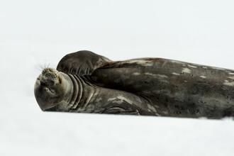 Jonas Beyer, Rest (Antarktis, Europa)