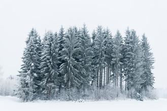 Pekka Liukkonen, A small Snowy Forest (Finland, Europe)