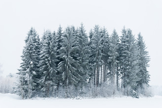 Pekka Liukkonen, A small Snowy Forest (Finnland, Europa)