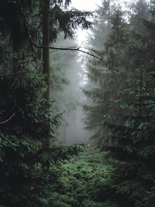 Mitten im Wald - fotokunst von Sebastian Wilczewski