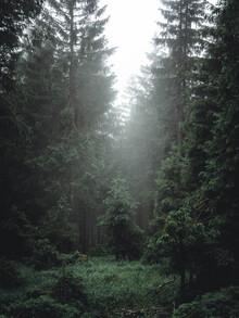 Sebastian Wilczewski, Tief im Wald (Deutschland, Europa)