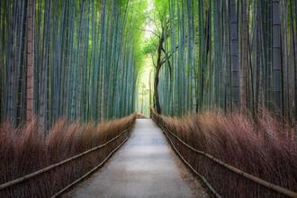 Jan Becke, Bambuswald in Arashiyama (Japan, Asien)