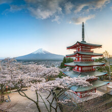 Jan Becke, Chureito Pagode und Berg Fuji im Frühling (Japan, Asien)