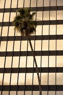Tonio Bessa, Beverly Hills Palm Tree (Vereinigte Staaten, Nordamerika)