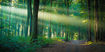 Martin Wasilewski, Forest Path in the Light (Germany, Europe)