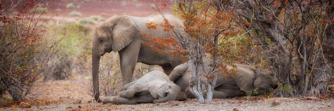 Dennis Wehrmann, Schlafende Elefanten in der Wüste (Deutschland, Europa)