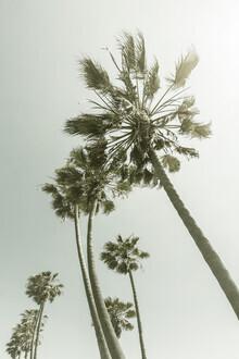 Melanie Viola, Vintage Palmenidylle mit Sonne (Vereinigte Staaten, Nordamerika)