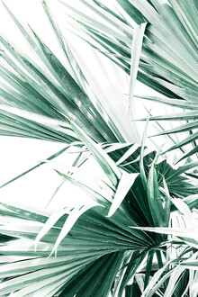 Victoria Frost, Palm Leaves II (Indien, Asien)