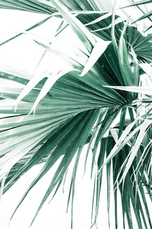 Victoria Frost, Palm Leaves (Indien, Asien)