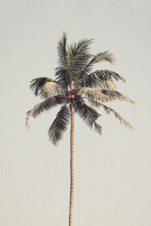 Victoria Frost, Palm tree by the beach (Indien, Asien)