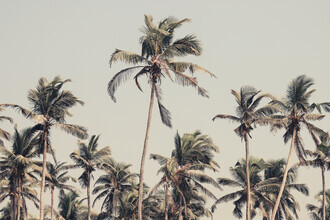 Victoria Frost, Palm Trees on the beach (Indien, Asien)