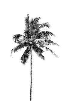 Victoria Frost, Palm tree by the beach (India, Asia)