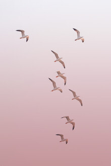 Victoria Frost, Birds in the Sky (India, Asia)