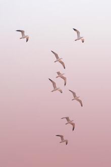 Victoria Frost, Birds in the Sky (Indien, Asien)