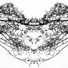 Daniel Theus, Reflection on the water Heart Love Black and White branches (Germany, Europe)
