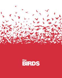 Rahma Projekt, The Birds (Brasilien, Lateinamerika und die Karibik)