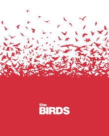 Rahma Projekt, The Birds (Brazil, Latin America and Caribbean)
