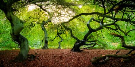 Martin Wasilewski, Tanz der Bäume (Deutschland, Europa)