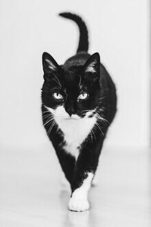 Nadja Jacke, Katze im Anmarsch (Deutschland, Europa)