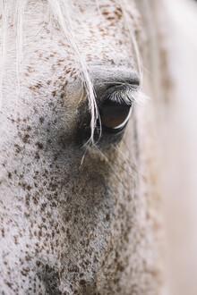 Nadja Jacke, Auge einer Araber Stute (Deutschland, Europa)