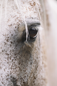 Nadja Jacke, Eye of an Arab mare (Germany, Europe)