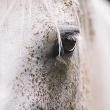 Nadja Jacke, Eye of a horse (Germany, Europe)