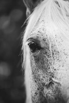Nadja Jacke, Pferd (Germany, Europe)