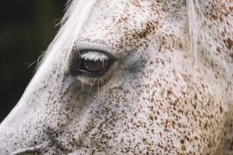 Nadja Jacke, Pferd (Deutschland, Europa)